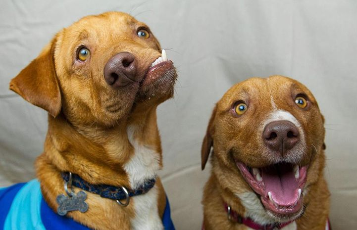 Picasso and Pablo from Luvable Dog Rescue