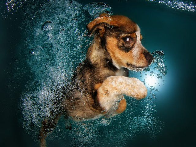 Are we talking about swimming dogs? More in post. - Imgur