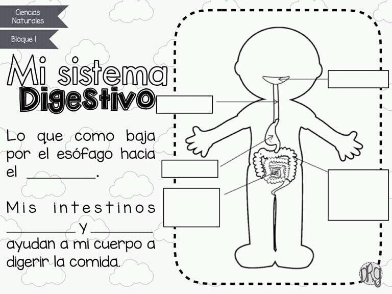 Sistema Digestivo Trabajos Escolares Con Imagenes Sistemas