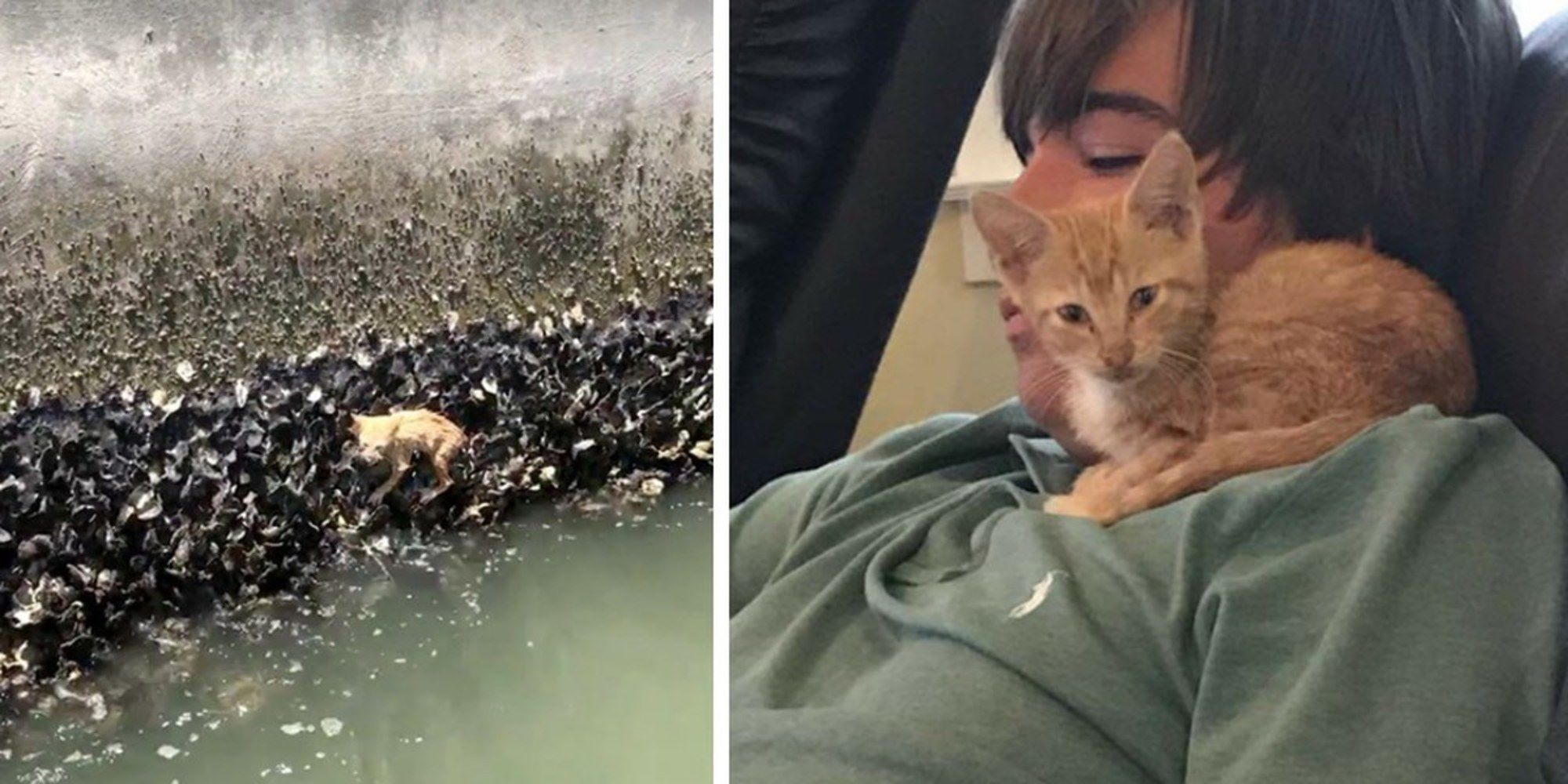 Family Saves Kitten Hanging onto Oysters and The Kitten