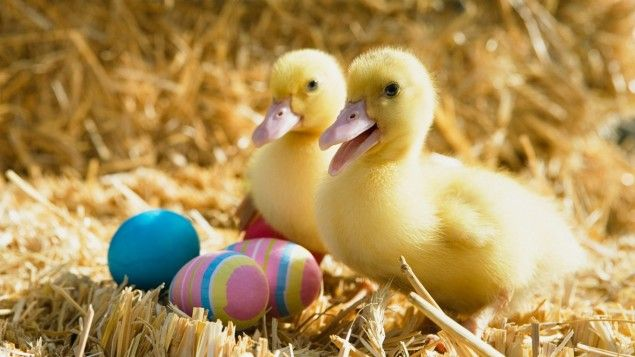 Ducklings and Easter Eggs wallpapers