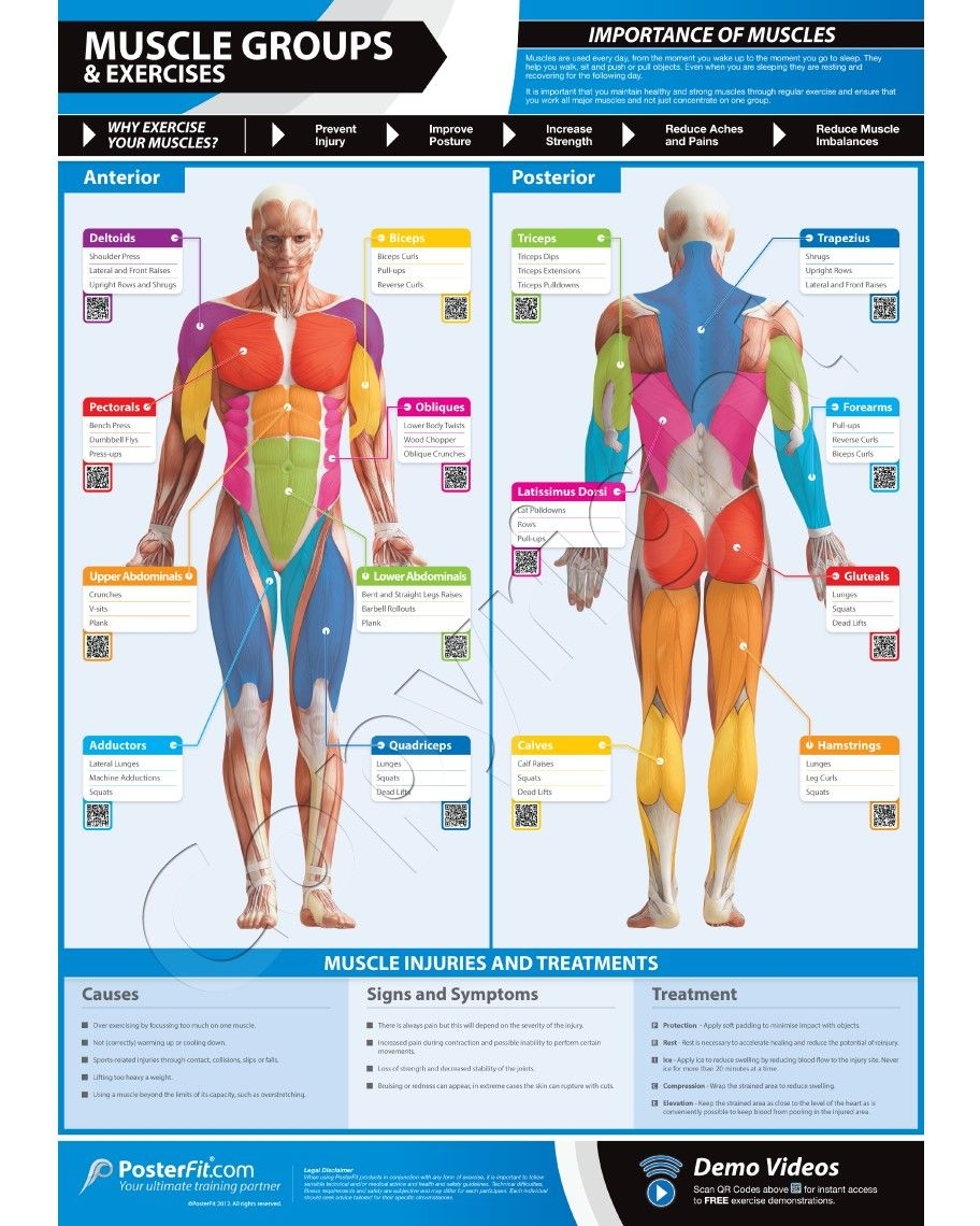 muscle groups exercises wall poster health exercise tips