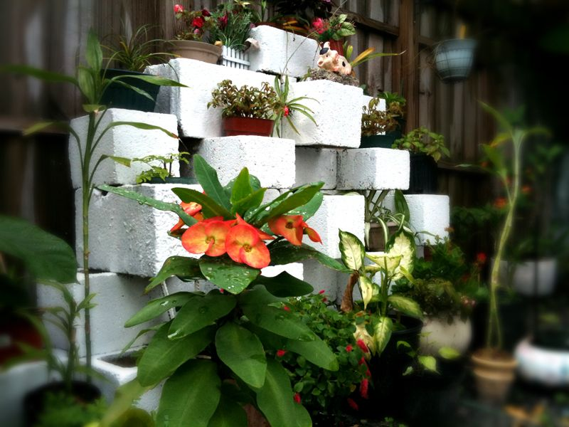 Stack cinder blocks in patterns for a cool    planter design