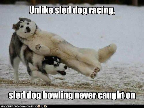 sled dog bowling - Yahoo Image Search Results