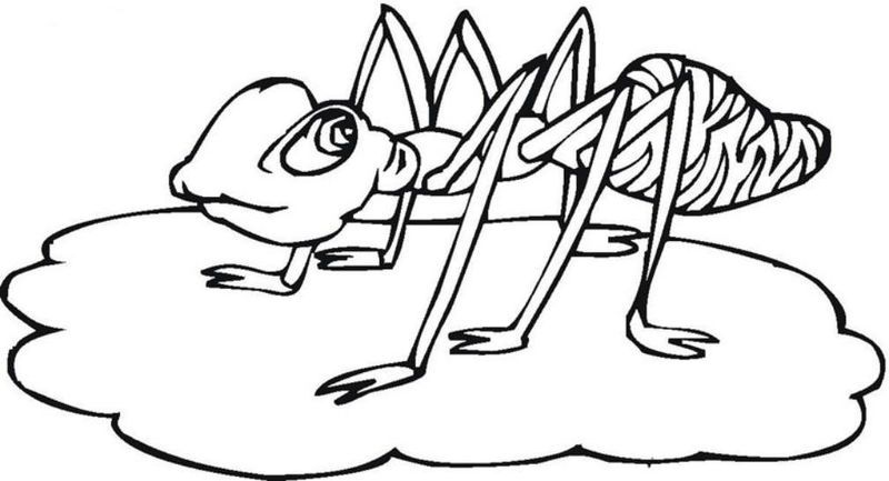 Ants Coloring Pages For Kids Also See The Category To Read