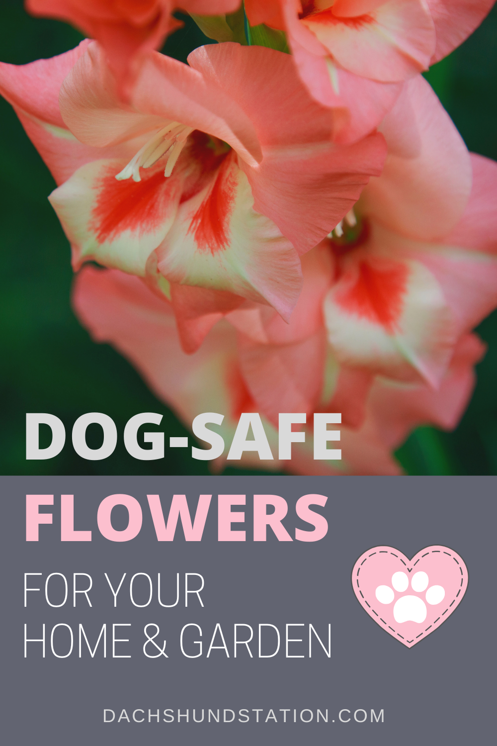 15 Colorful Flowers You Can Plant In A Dog Safe Garden Dog Safe Plants Dog Friendly Plants Dog Safe