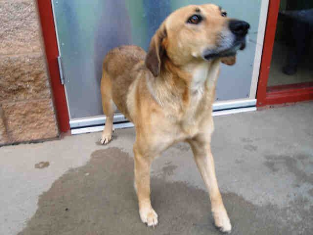 My name is Natalee, and I hope you get to spend some time with me today. One thing that I would love in my new home is toys to play with. They could really help me adjust to all my new surroundings, and give me something nice to play with in my new home. I am a spayed female, tan and black Hound mix and I am about 2 years old (ID#A080496)