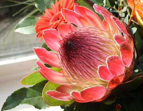 Names Hawaiian Flowers | ... hawaiian-tropical-flower ...