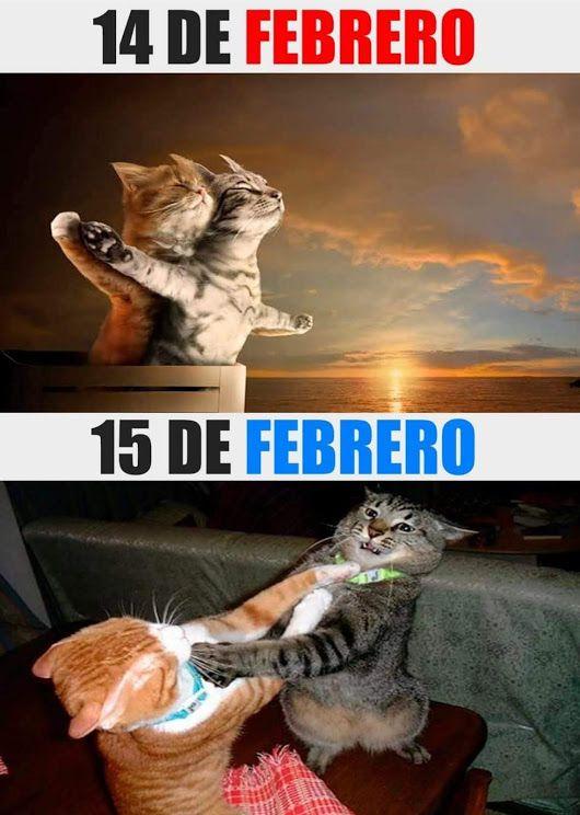 Sign In Humor Divertido Sobre Animales Memes Divertidos Humor Divertido