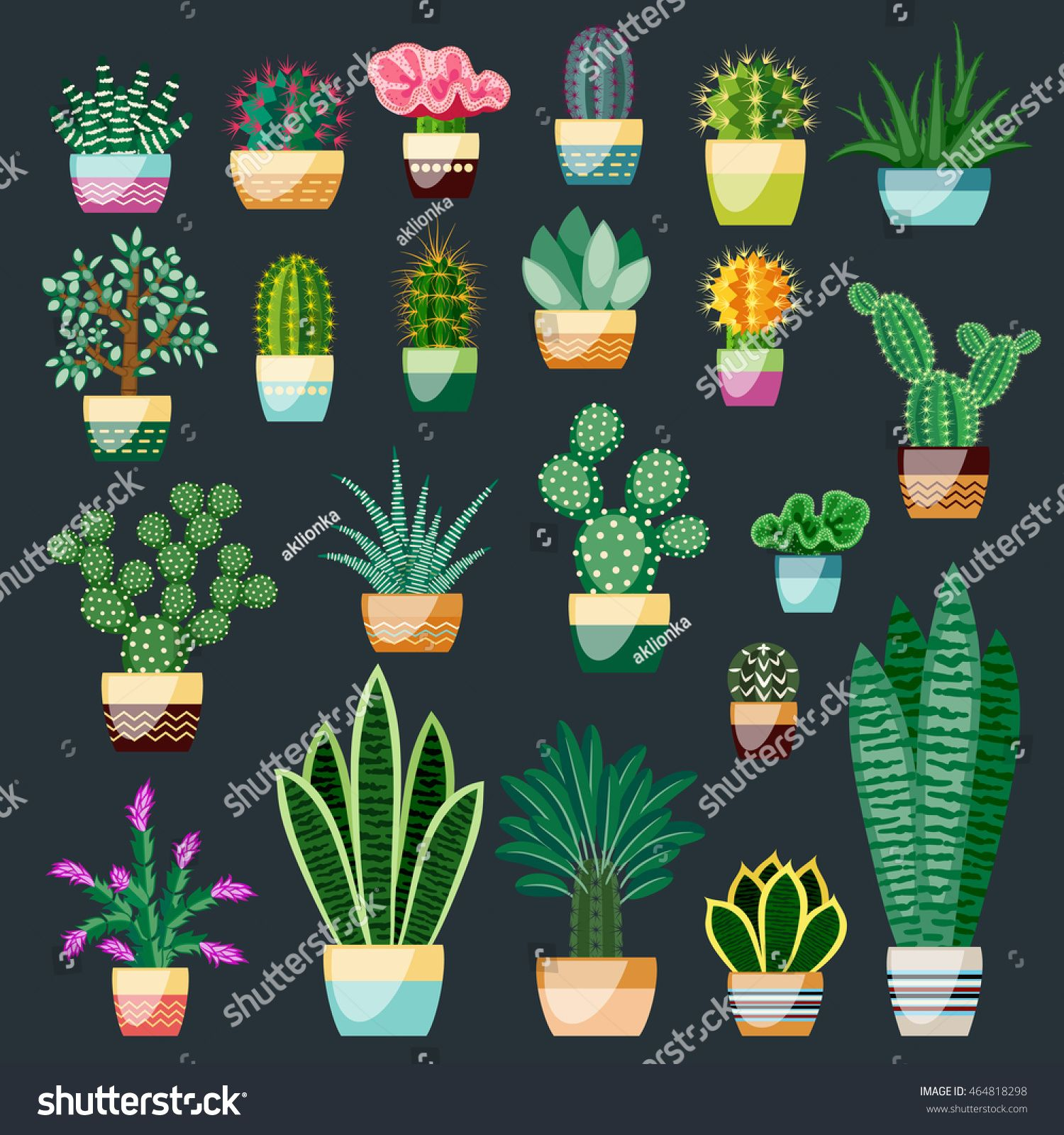 Set Of Cactus And Succulents In Pots Indoor Plants In A Flat