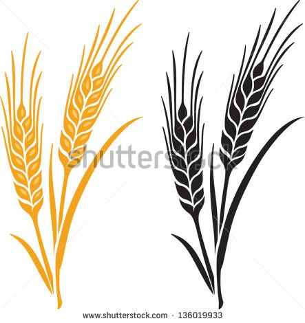 ears of wheat barley or rye vector visual graphic icons ideal for rh pinterest com barley vector free barley vector eps