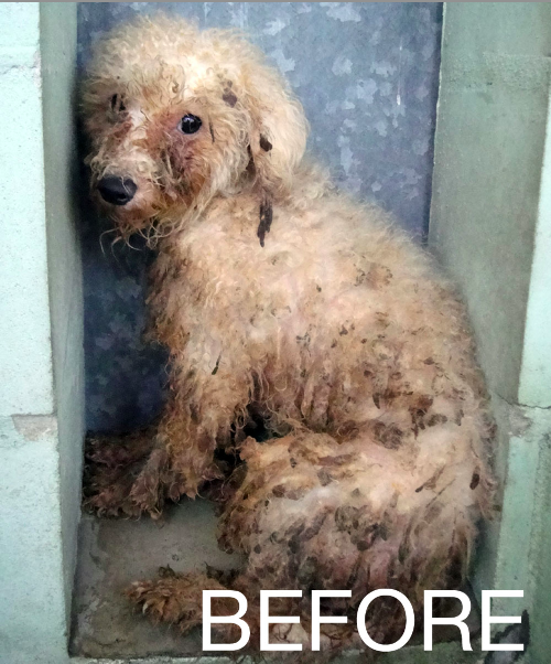 Puppy Mill Dogs Before And After Photos Puppy Mill Rescue Puppy Mills Dog Abuse