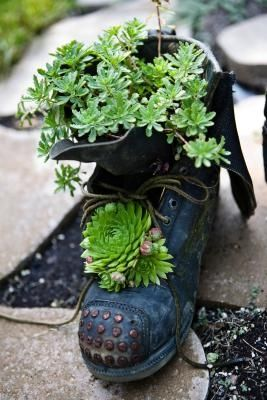 Succulents in an old boot.  #succulent #garden #boot