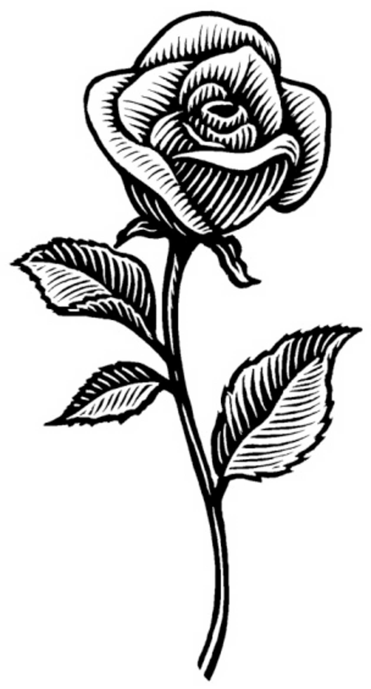manos-con-rosas-en-dibujos.jpg 1.260×2.338 píxeles | LineArt | Pinterest
