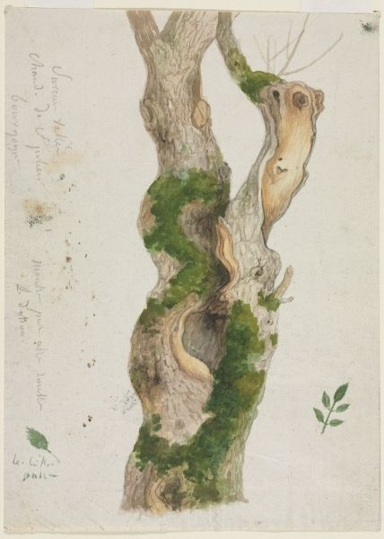 Georges Michel French 1763 1843 Study Of A Tree Trunk