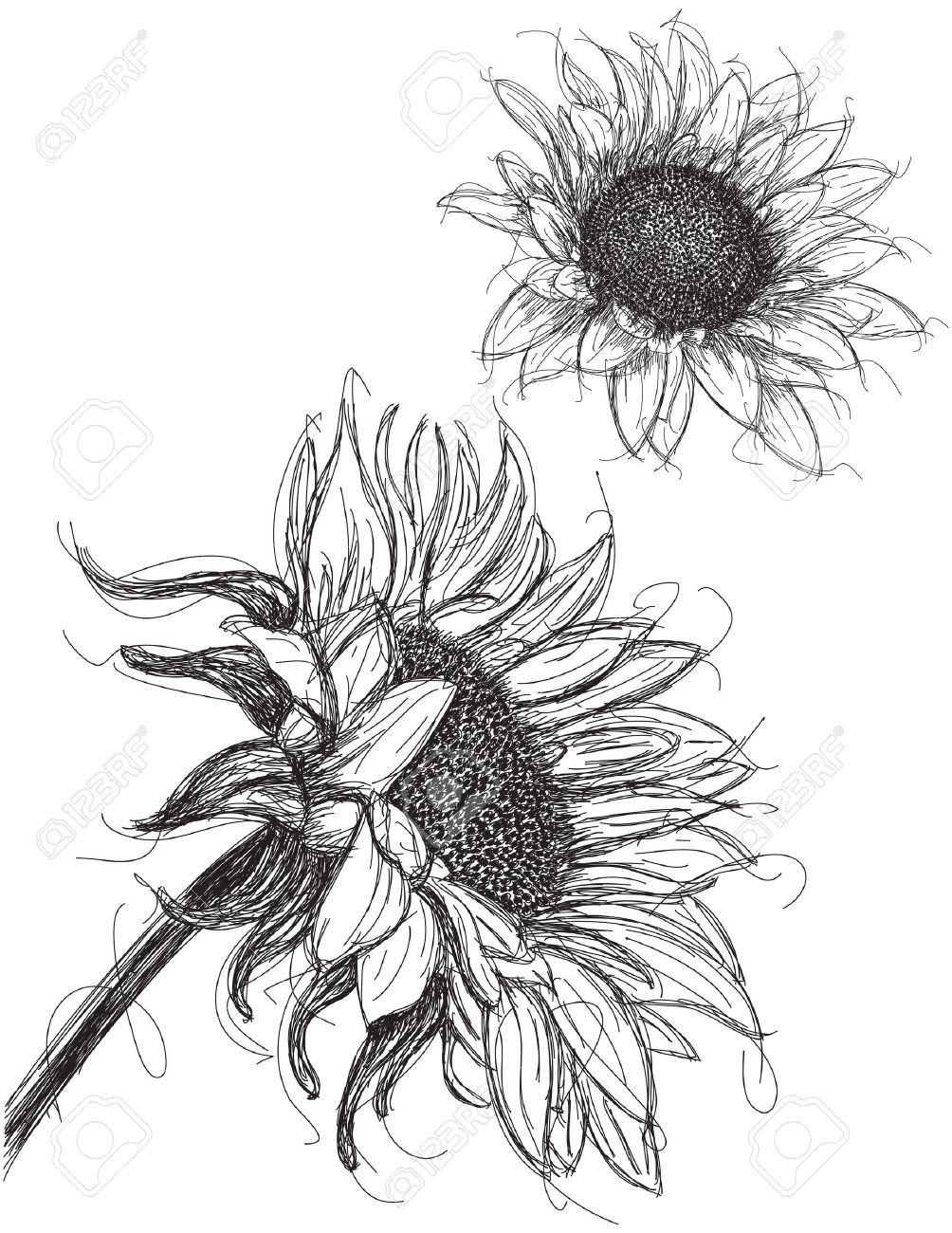 Sunflower Drawing Summer Art Inspo Sunflower Drawing Sunflower Sketches Sunflower Art