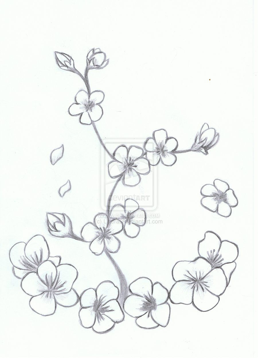 Draw Cherry Blossom Manga  Cerca Con Google