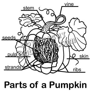 clip art: pumpkin cut away b labeled - preview 1   1st ... diagram of pumpkin leaf #1