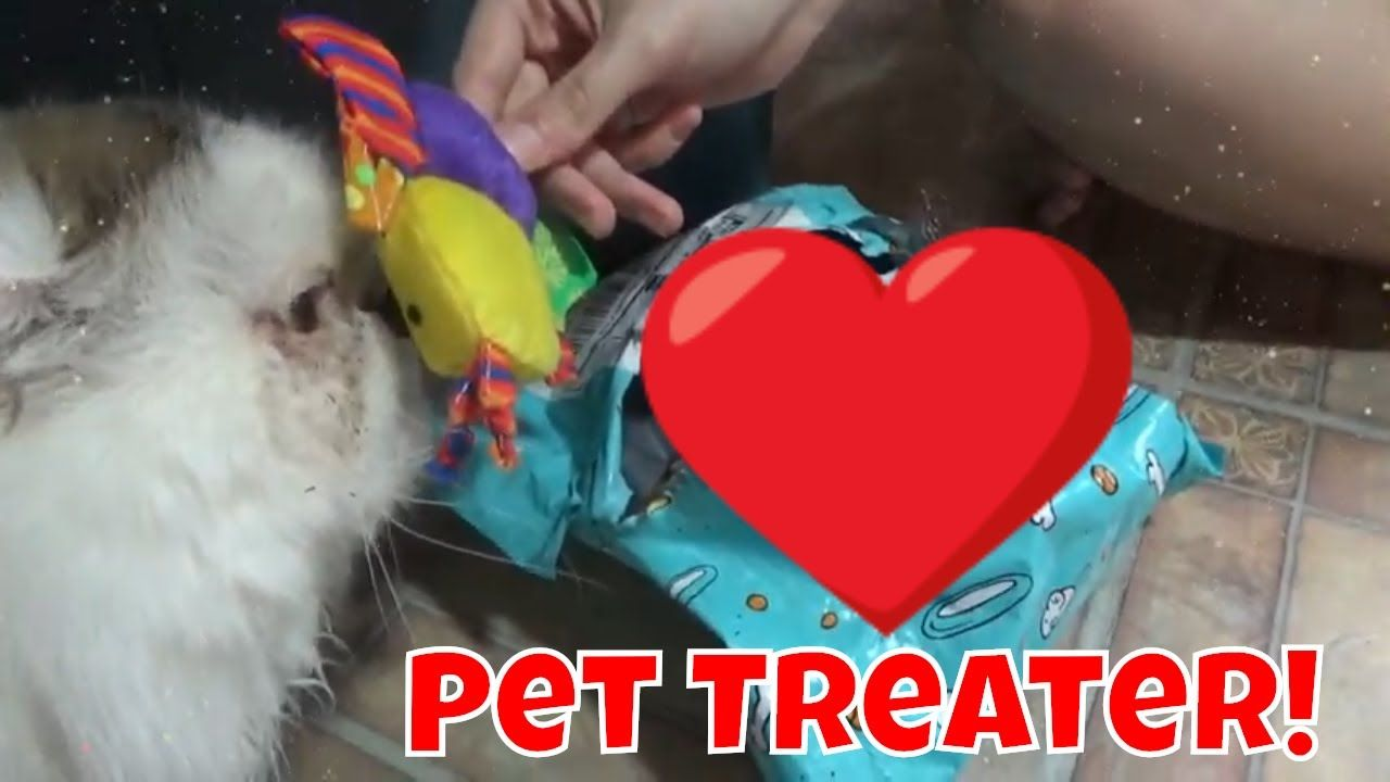 Unboxing Pet Treater For Cats Reject Stuff February 2019 Pets Cats Unboxing