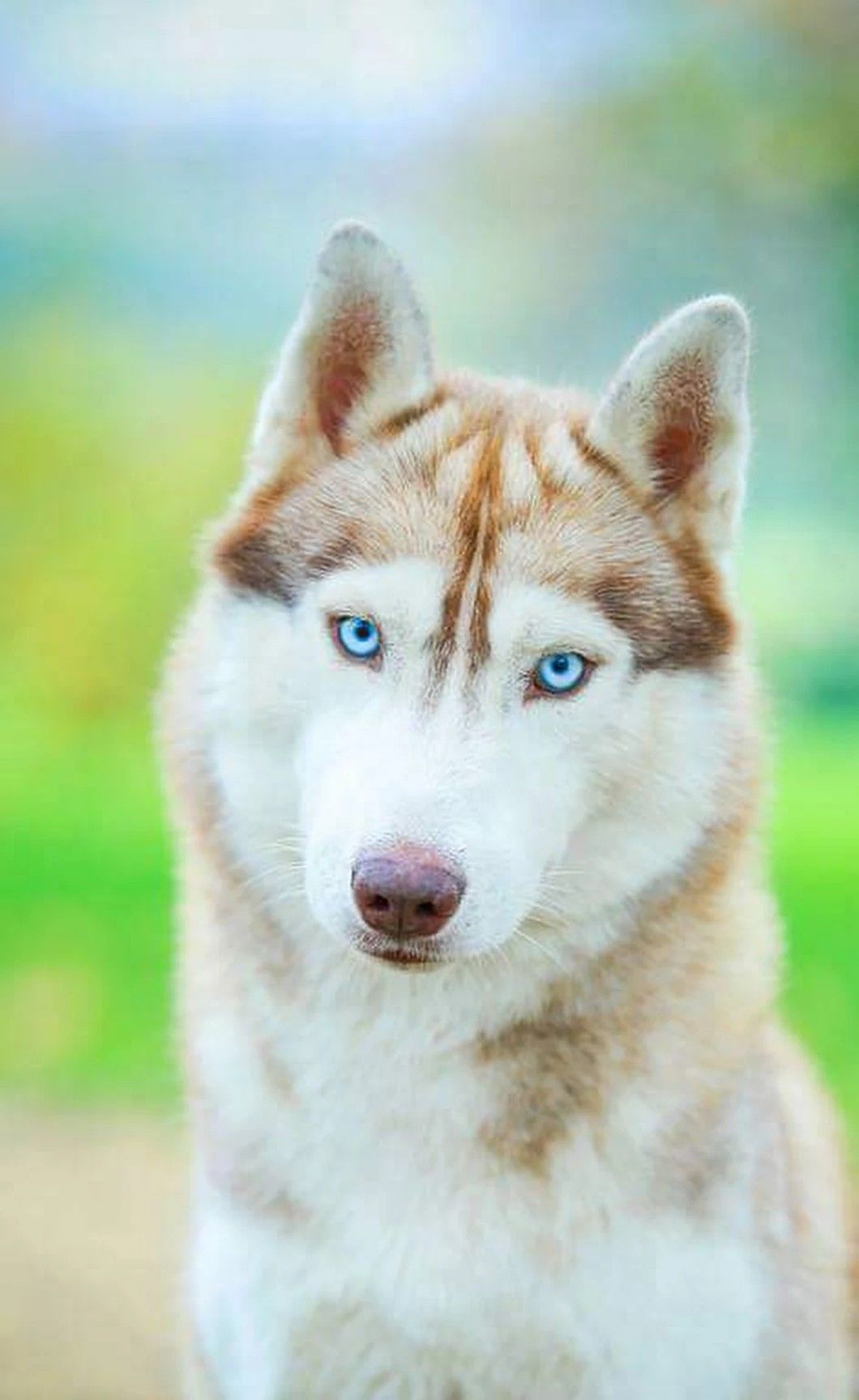Pin By Shane Russian On Fav Dogs Beautiful Dogs Animals