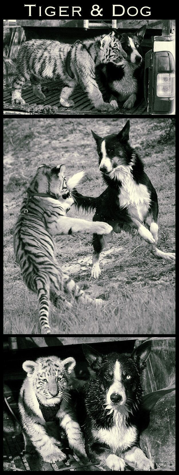 M.           buzzfeed.com/     summeranne/interspecies-friendships-of-the-year?
