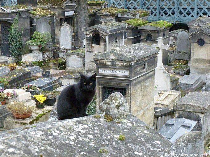 BLACK CAT ON CEMETERY