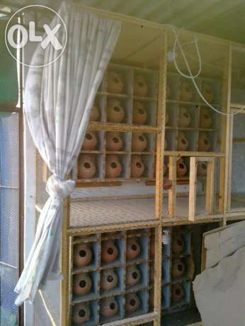 Cages And Master Cages In Karachi Bird Cage Cage Finch Cage