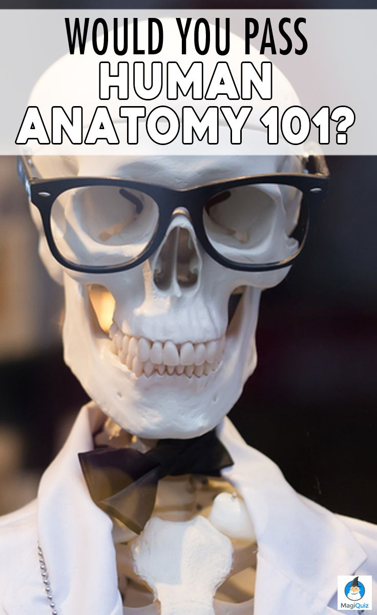Would You Pass Human Anatomy 101? | 22 Words on Cool Quizzes ...