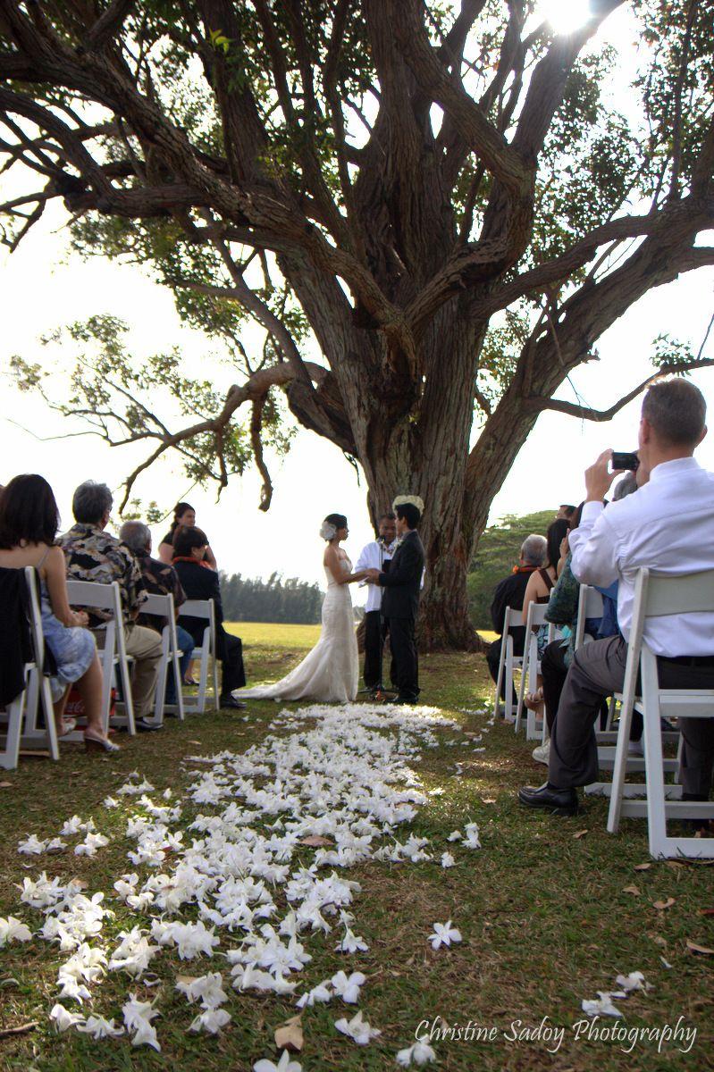 Beautiful Wedding Ceremony Under The Eucalyptus Tree In Sunset