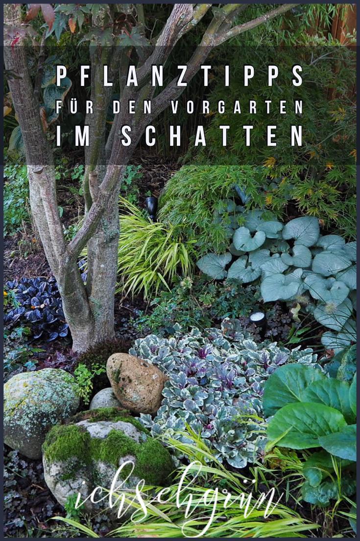 Pflanztipps für den Vorgarten im Schatten • Ich seh grün