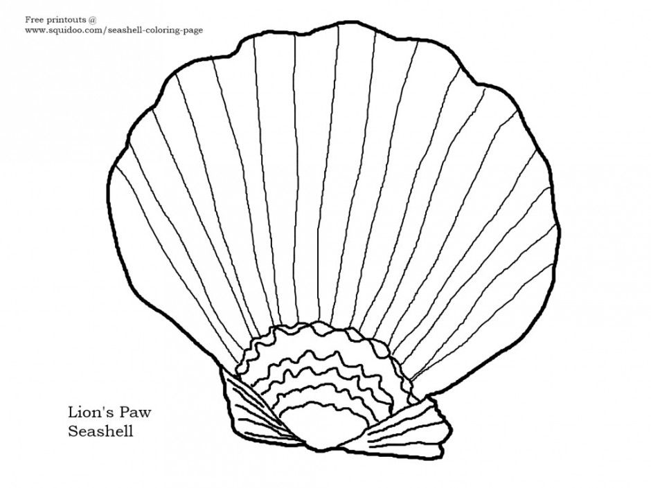 Cowry Seashells And A Free Printable Coloring Page Seashells By