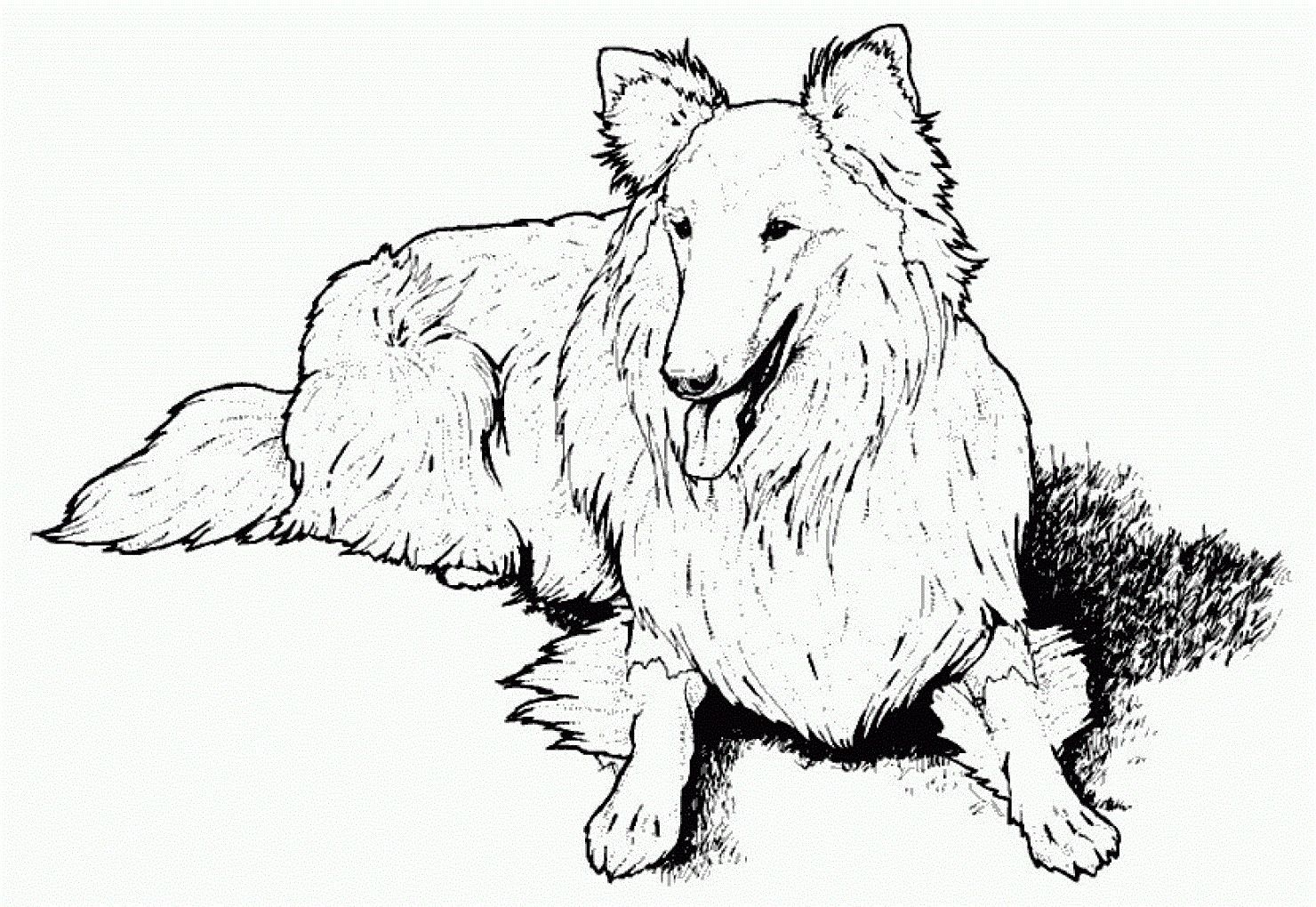 Realistic Dog Coloring Pages Unique Coloring Free Coloring Pages For Adults Landscape Ideas Dog Coloring Page Puppy Coloring Pages Dog Coloring Book [ 1020 x 1480 Pixel ]