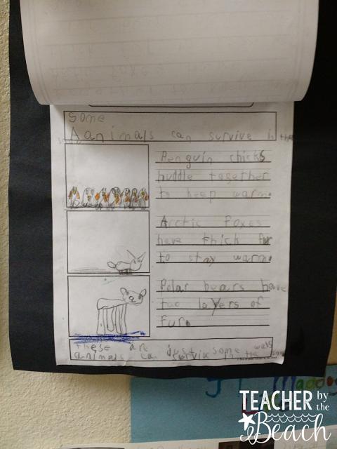 Teacher by the Beach: Main Idea and Details - Summary Writing