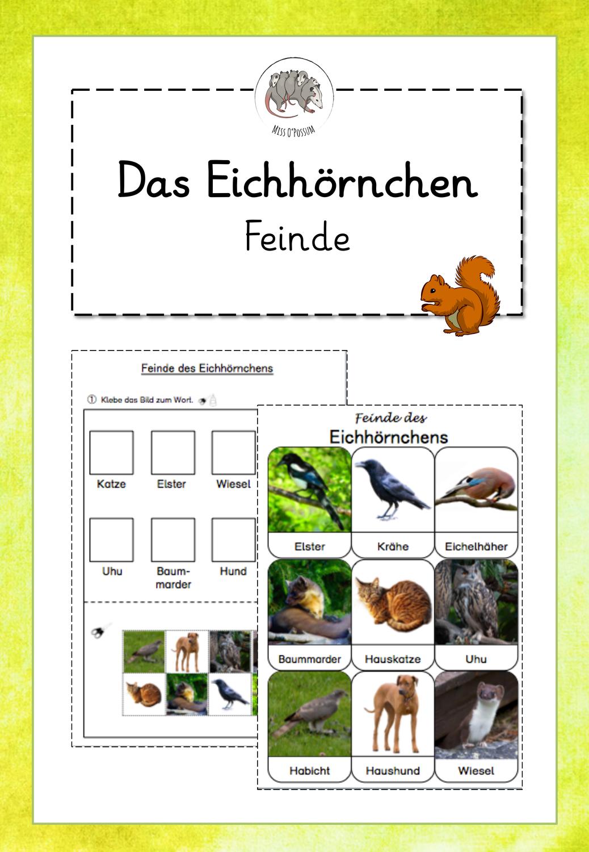 Eichhörnchen Text