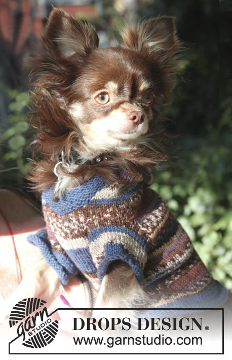 a chihuahua and a sweater for a chihuahua -DROPS Inspiration | Dog ...