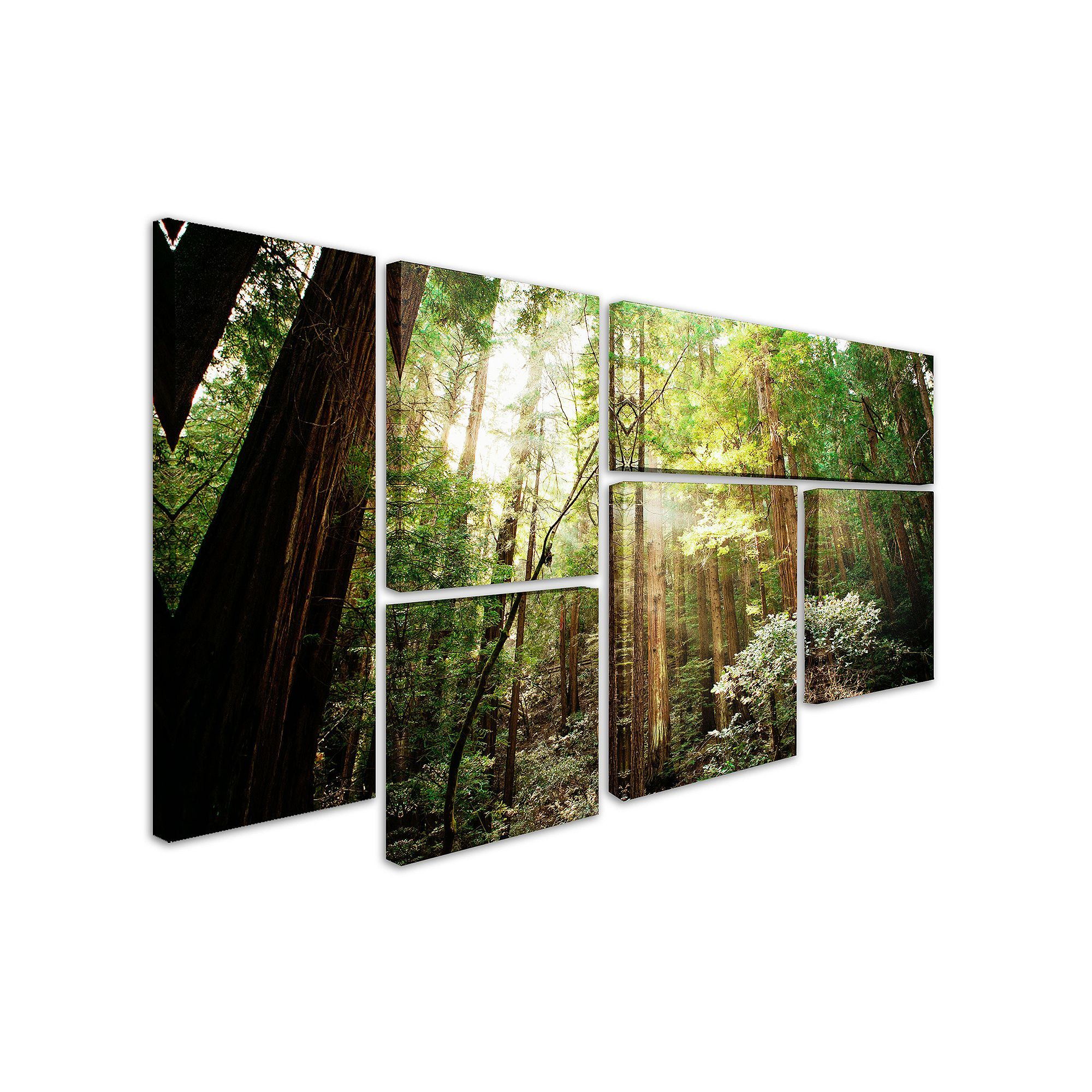 Muir woods 6 piece canvas wall art set multicolor