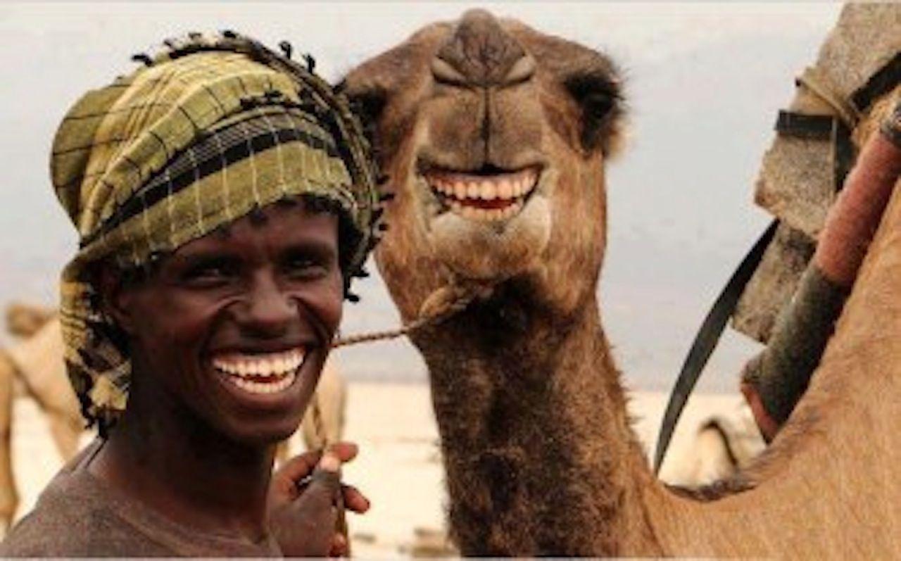 Hump Day Camel Woo Woo Hump Day Camel Woo Woo Hump