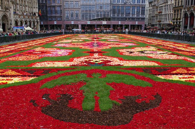 tapis de fleurs flower carpet