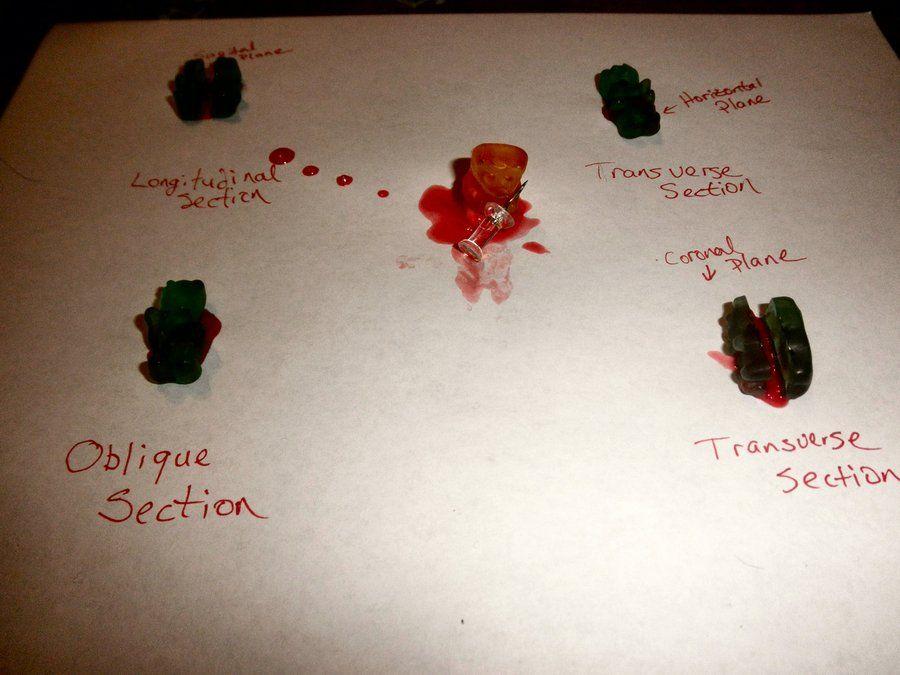 Anatomy & Physiology of gummies | Everything Gummy Bears | Pinterest