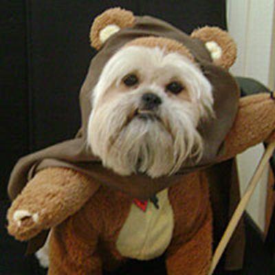 pets dressed as star wars
