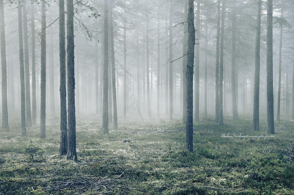 Mist-ical Forest by Stridsberg.deviantart.com