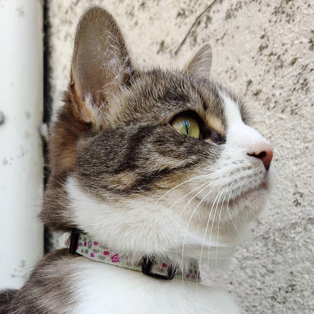 ❤️ #catsofinstagram #cuteanimals #cats #animals #funnycats #europeancats #europeancatsofinstagram #grumpycats #grumpycatsofinstagram #weirdcats #weirdcat #coolcats #coolcat #cutecats #cutecatsofinstagram #catstongueout #catstongue #catslover #catsoftheday #catspic #cats_of_instagram #catsvideo #catsvideos #funnycatvideos #catsmemes #catspic #shotononeplus #oneplus7 #oneplusfamily