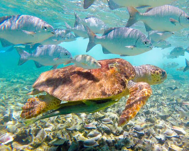10 Unbelievable Places To Visit In Central America   -  #CentralAmericaDestinations #CentralAmericaDestinations3Weeks #CentralAmericaDestinationsAnimals #CentralAmericaDestinationsColors
