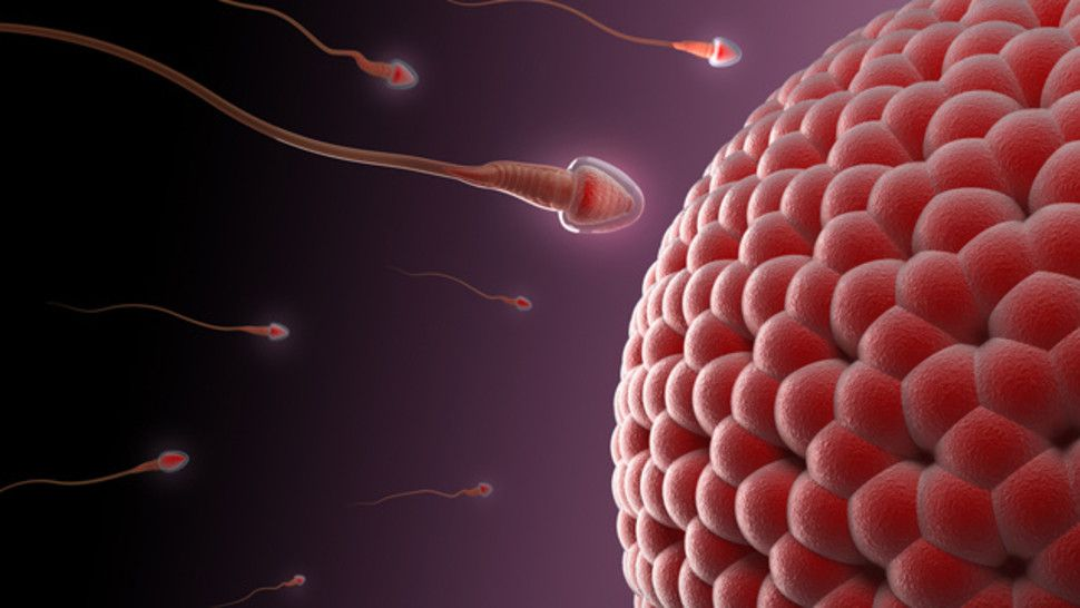 Wife pregnancy risk sex
