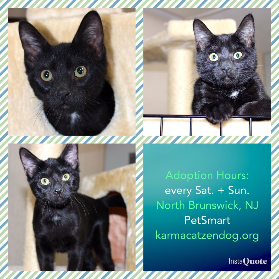 Kittens At The North Brunswick Nj Petsmart Adoption Hours Every