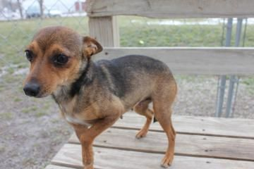 Lana Is A Cute And Sweet Little Girl She Can Be A Little Nervous Around New People If You Give Her Ti Dog Adoption Homeless Pets Animal Companions