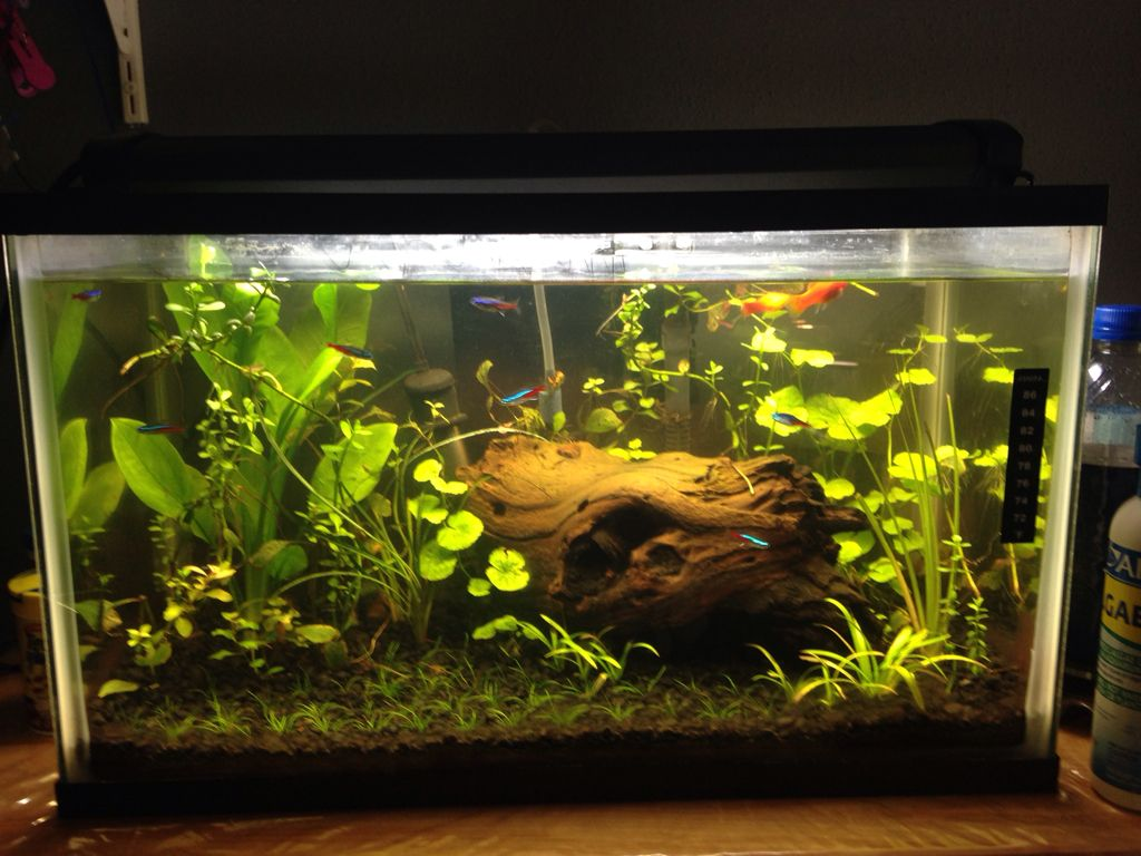 10 gallon aquarium planted google search 10 gallon for Fish for a 10 gallon tank