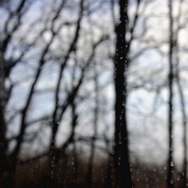 ich kann bäume sehen und den wald, via Flickr.