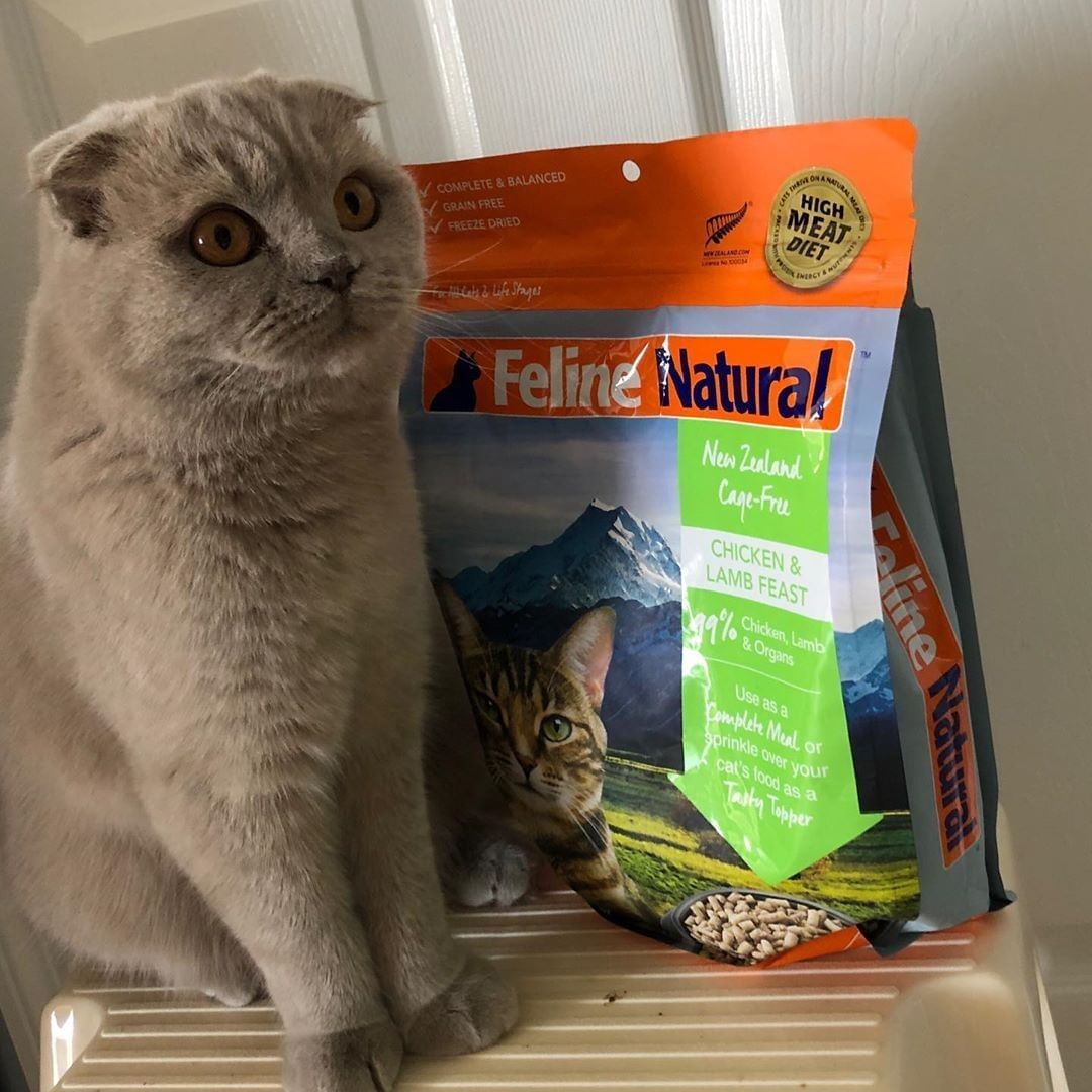 Repost Fifilola Lachatte This Is My Favorite Food I Basically Won T Eat Anything Else Felinenatural Cat Food Natural Cat Food Cat Memes