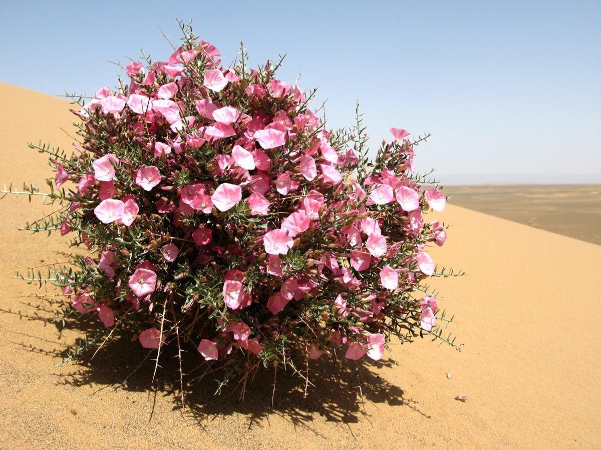 Какие цветы любят песчаную почву с фото заключению